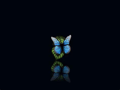 butterfly wallpaper for macbook 1600x1200 butterfly desktop pc and mac wallpaper