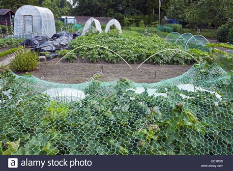 Vegetable Garden Netting Garden Ftempo Netting For Vegetable Gardens