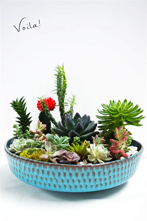 succulent planter diy for under 10 weed em reap diy succulent garden quinn cooper style elevate your style