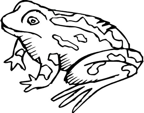 coloring pages of realistic fish free coloring pages of realistic frogs