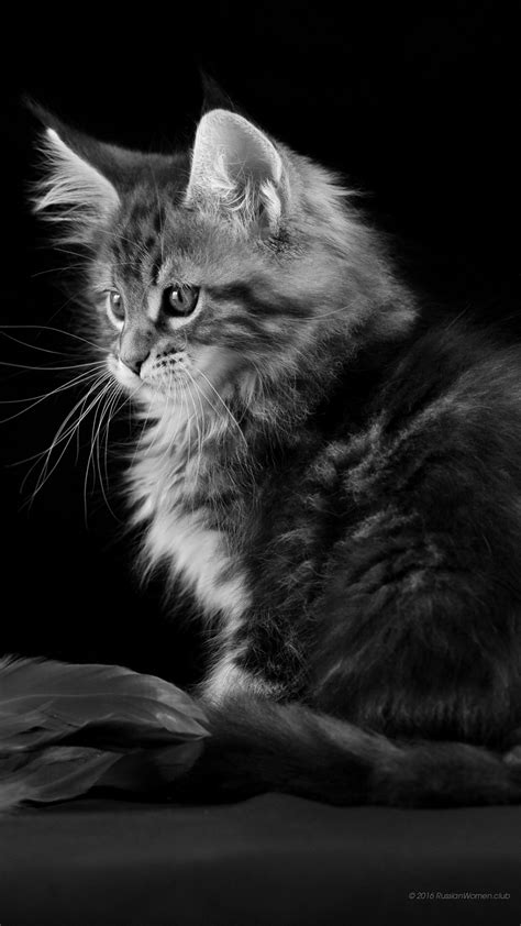Cat Wallpaper Vertical | 1080 x 1920 cat wallpaper full hd 1080x1920 tempting