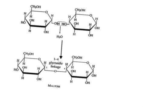 carbohydrates primary function carbohydrates function medicinebtg