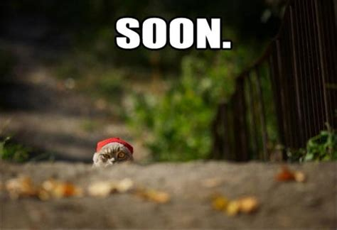 Soon Cat Meme - funny quot soon quot meme 38 pics
