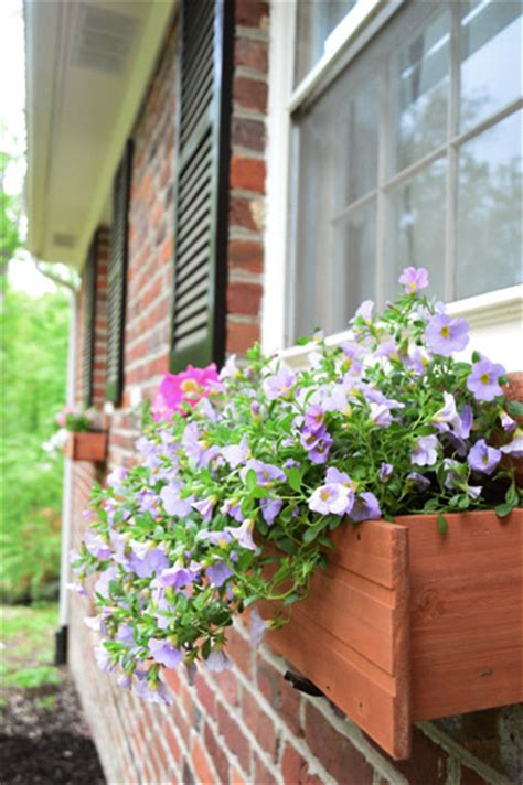 hanging window box planters challenge planting hanging window
