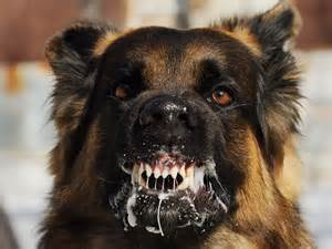 Dog A Navy Seal Explains What To Do If You Re Attacked By A