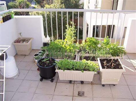 Porch Garden Vegetables Variety Pot Balcony Garden Ideas Vegetables 510