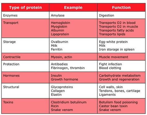 3 proteins and their functions these are the types of proteins and their many functions