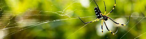 mittel gegen spinnen spinnen einfach entfernen kammerj 228 ger ratgeber