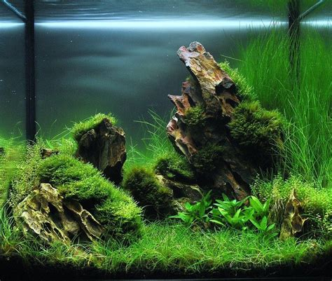 Aquascaping Materials by Aquarium Hardscape Materials 1000 Aquarium Ideas