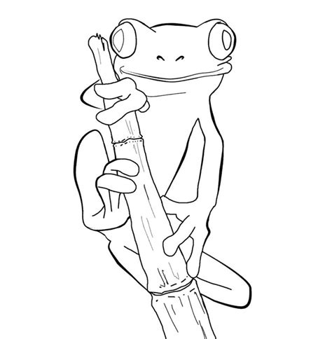 coloring pages of a red eyed tree frog tree frog outline