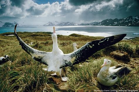 interesting facts  albatrosses  fun facts