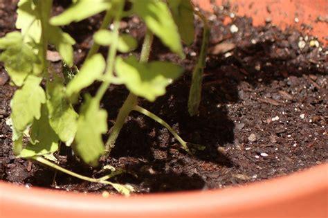 How To Reuse Potting Soil Hgtv Potting Soil For Vegetable Garden