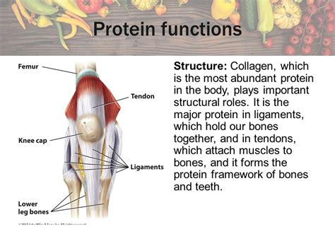 6 protein functions chapter 6 proteins amino acids ppt