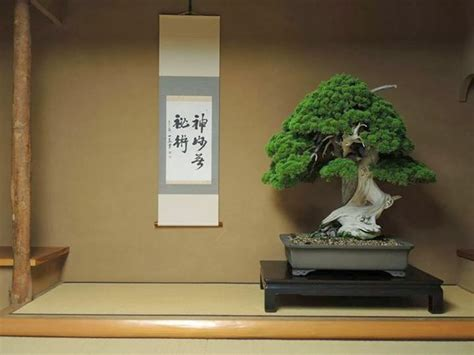 old bonsai tree top 5 oldest bonsai trees the ancient art of bonsai