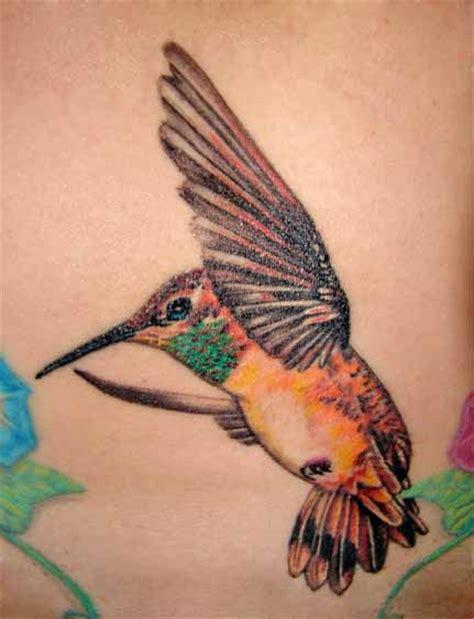 hummingbird tattoos designs high quality photos and flash