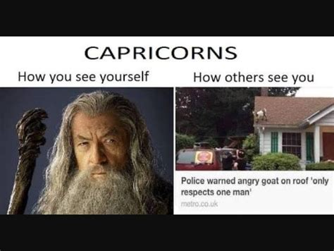 the 25 best capricorn meme ideas on pinterest horoscope