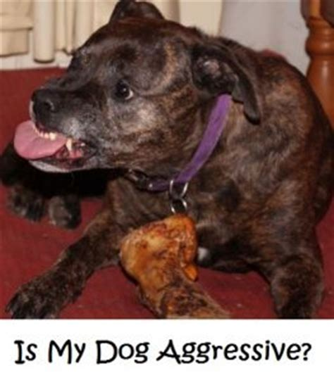 my puppy is aggressive your is not aggressive as thought discoveries