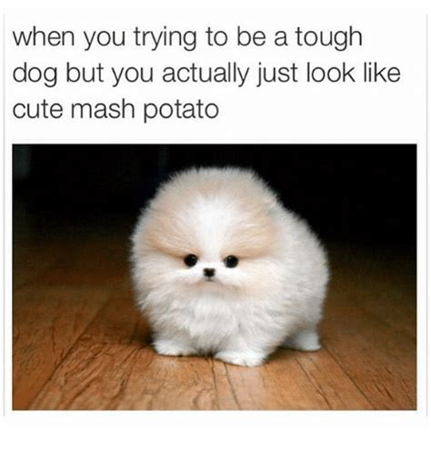 Cutest Memes - when you trying to be a tough dog but you actually just
