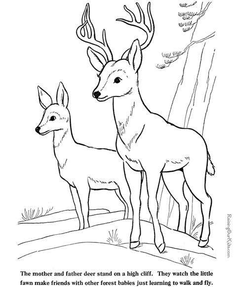 deer tracks coloring pages deer coloring page coloring home