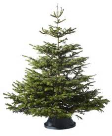 Get your ikea live christmas tree and enjoy 50 rebate in a form of an