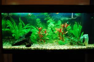 Aquarium by Our Freshwater Aquarium 30 10 2010 Or How I Made My