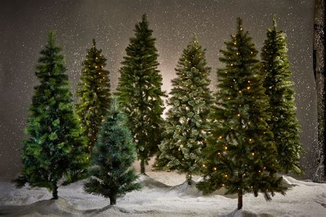 where to buy a real christmas tree in belfast the tree without the tears californian in