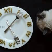 how often should you feed your cat wants to eat all the time