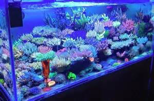 marin color fauna marin color elements mit verbesserter rezeptur und