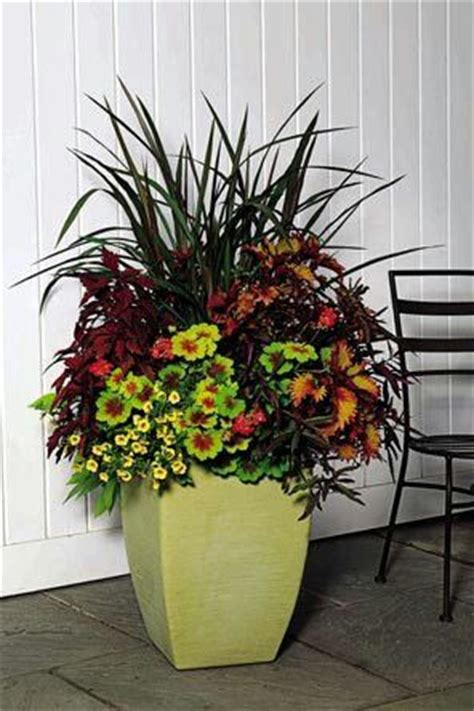Planters Flowers Design by 25 Best Ideas About Large Flower Pots On