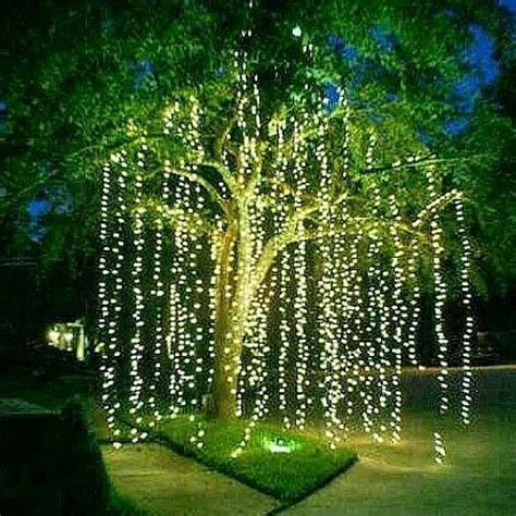 dont   weeping willow tree    yard