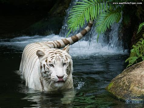 imagenes hd animales wallpapers fondos de pantalla de animales hd im 225 genes taringa