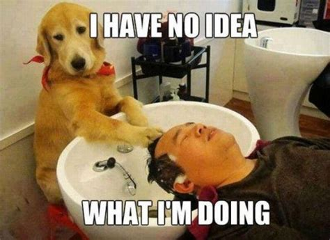 Funny Massage Meme - the dog spa funny animal pictures