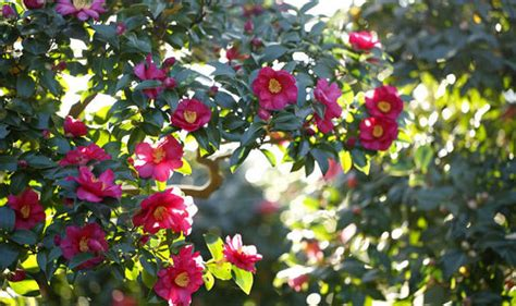 winter garden flowers winter garden bring an sparkle with a variety of