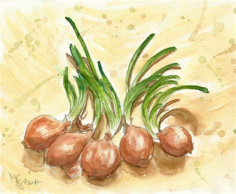 onion hair style five onions with cool hair styles by tabascofanatikerin on