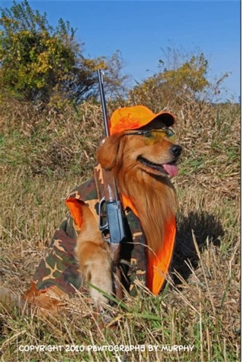 golden retrievers to hunt the multi tasking golden retriever and retriever murphy goes by