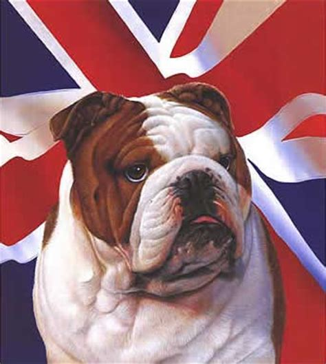 fiso british bulldogs final result fiso