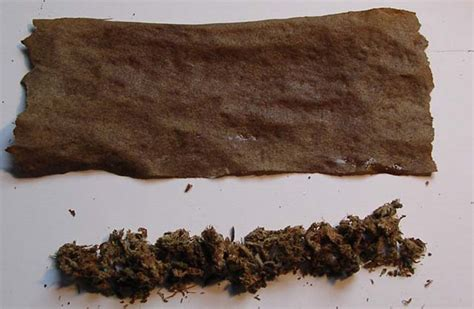How To Make A Blunt Out Of Paper - growery rolling a blunt