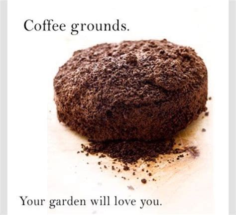 Are Coffee Grounds For Your Garden by Adding Coffee Grounds To Your Garden Will Bring You