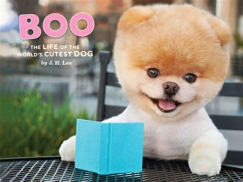 boo pomeranian owner boo the pomeranian world s cutest with two millions fans on