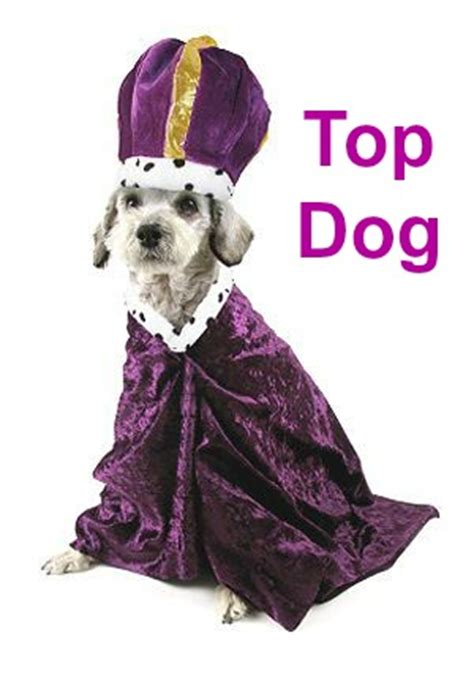 top puppies top names just what are the most popular top ten