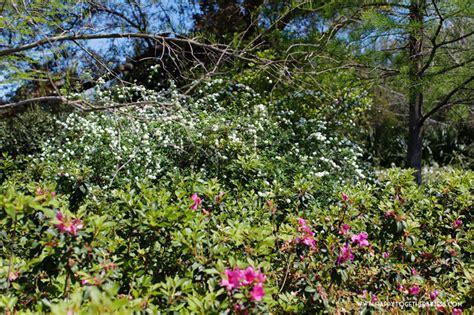 Botanical Gardens Orange Shangri La Botanical Gardens In Orange Tx