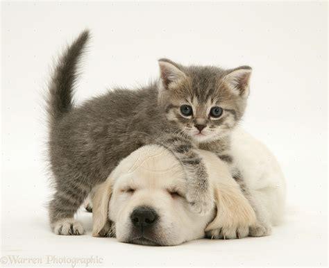 gallery  cute baby kittens  puppies sleeping