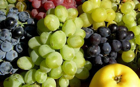 imagenes hd uvas grapes full hd wallpaper and background image 1920x1200