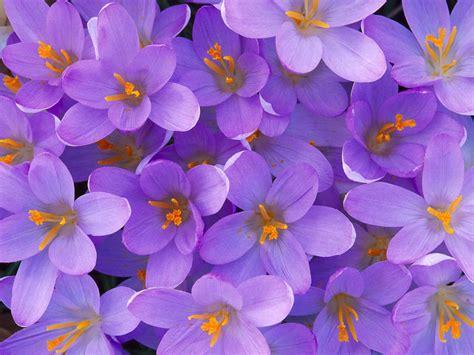 imagenes de rosas matizadas lo actual en fondo de pantalla flores hermosas descargar
