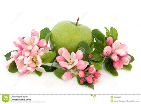 apple wallpaper white flower granny smith apple royalty free stock photography image