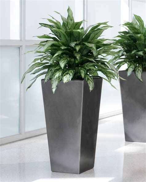 shop double full silver queen artificial plant  petals