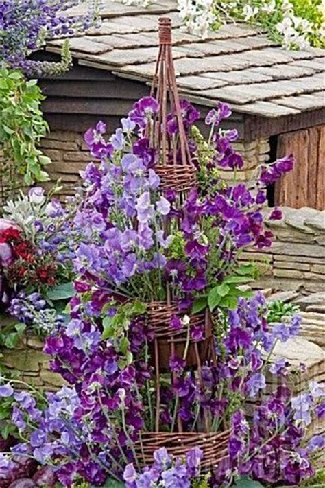 sweet peas climbing an obelisk purples i can just imagine the sweet smell of these flowers