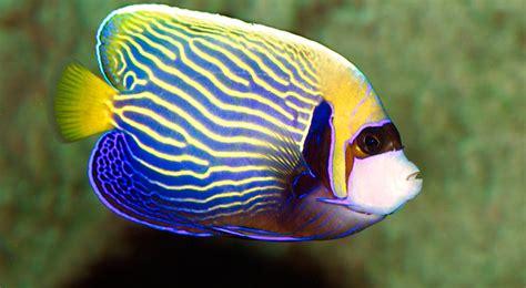 comptoir poisson exotique catalogue poisson exotique