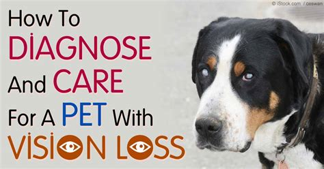pra in dogs blindness in dogs and cats indicate a threatening condition