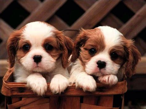 2 puppies togetherso cute cute backgrounds pinterest